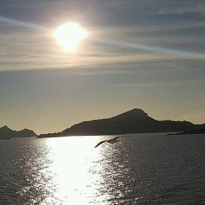 seagull escort out of Vigo #P&O #Oceana