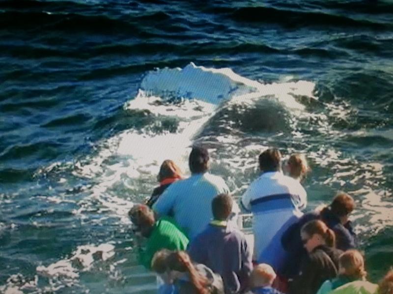 whaleluvr