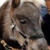 horsedoctor.gmail.com