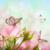 rosalmorris
