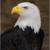 Eagle63