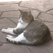 kittylin22