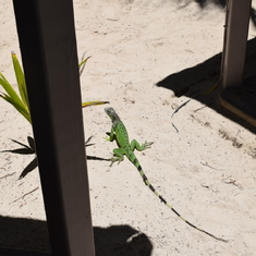 Orient Beach lunch with the Geckos