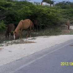 Horses, donkey's and cows roamed free. They didn't budge as we drove by.