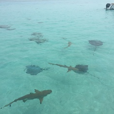 Swimming with sharks and rays