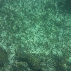 Snorkeling in Costa Maya
