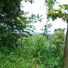 Ocho Rios, Jamaica - Jungle
