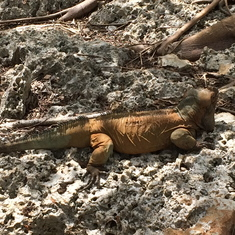Iguana's in La Romada, Dominic Republic.