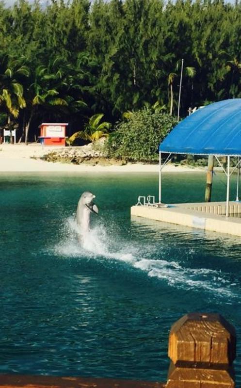 Blue Lagoon Dolphin Encounter - Norwegian Escape