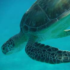 Charlotte Amalie, St. Thomas - turtle cove excursion