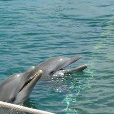 More Dolphin fun