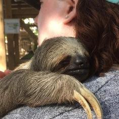 I held a sloth. You should too.