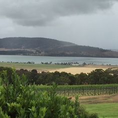Hobart, Tasmania, Australia - Oyster farmand Wine vineyard