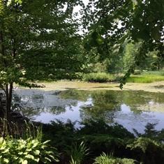 Halifax garden