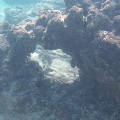 snorkling cayman