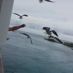 Crazy neighbor feeding the birds