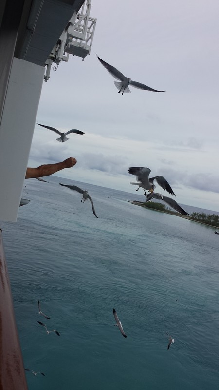 Crazy neighbor feeding the birds - Carnival Pride