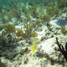 Freeport - Paradise Cove - Deadman's Reef - Snorkeling