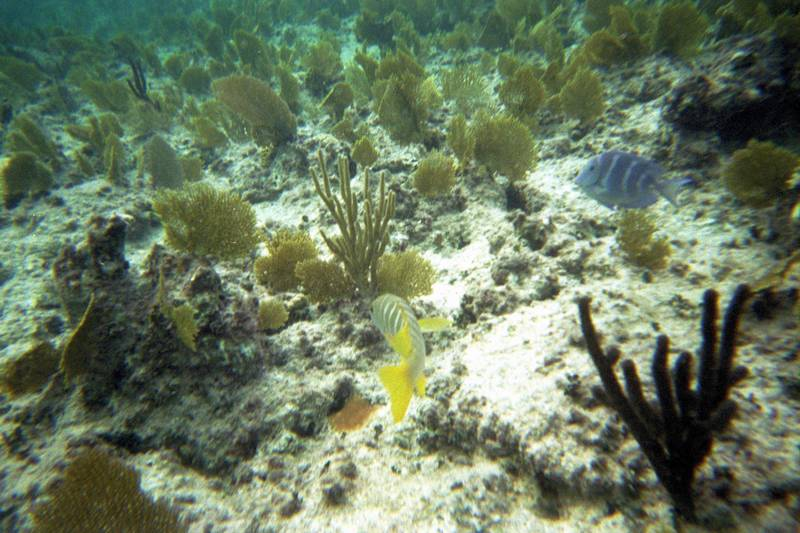 Freeport - Paradise Cove - Deadman's Reef - Snorkeling - Carnival Pride