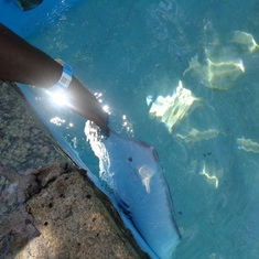 Charlotte Amalie, St. Thomas - Stingray at Coral world