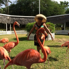 Flamingo Dancing at the Ardastra Gardens and Zoo!