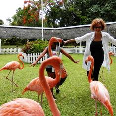 Nassau, Bahamas - Ardastra Gardens, Nassau