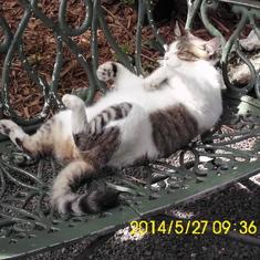 Key West, Florida - Hemingway Cat Key West Fl