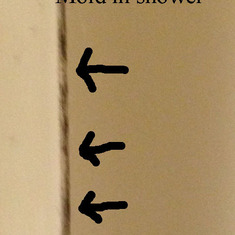 Mold in the shower!