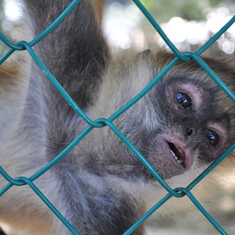 Monkey Zoo, Roatan
