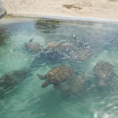 George Town, Grand Cayman - Cayman Turtle Farm