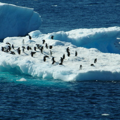 Penguins on ice flow in Antarctica