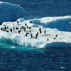 Cruise Antarctica - Penguins on ice flow in Antarctica
