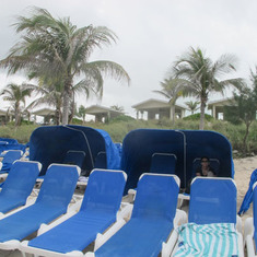 Clamshells on Great Stirrup Cay.