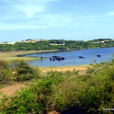Yala National Park  Hambantota, Sri Lanka