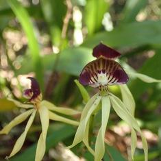 Costa Maya - botanical garden