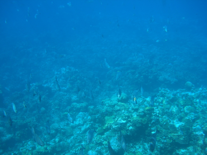 George Town, Grand Cayman - Fishes in Cayman Islands