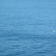 King's Wharf, Bermuda - Dolphins...
