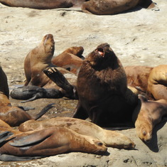Puerto Madryn, Argentina - sea lions valdez peninsula