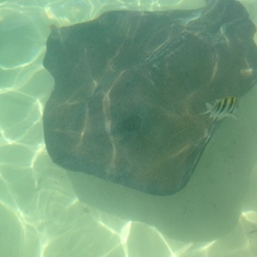 Half Moon Cay, Bahamas (Private Island) - Stingray excursion at Half Moon Cay.