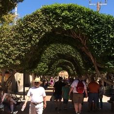 Tunnel of trees Loreto.
