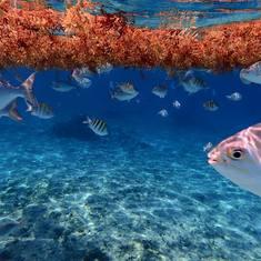 snorkeling in Cozumel - Playa Azul