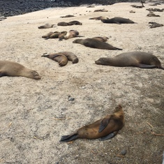 North Seymour, Galapagos - sea lions and fur seals in abundance