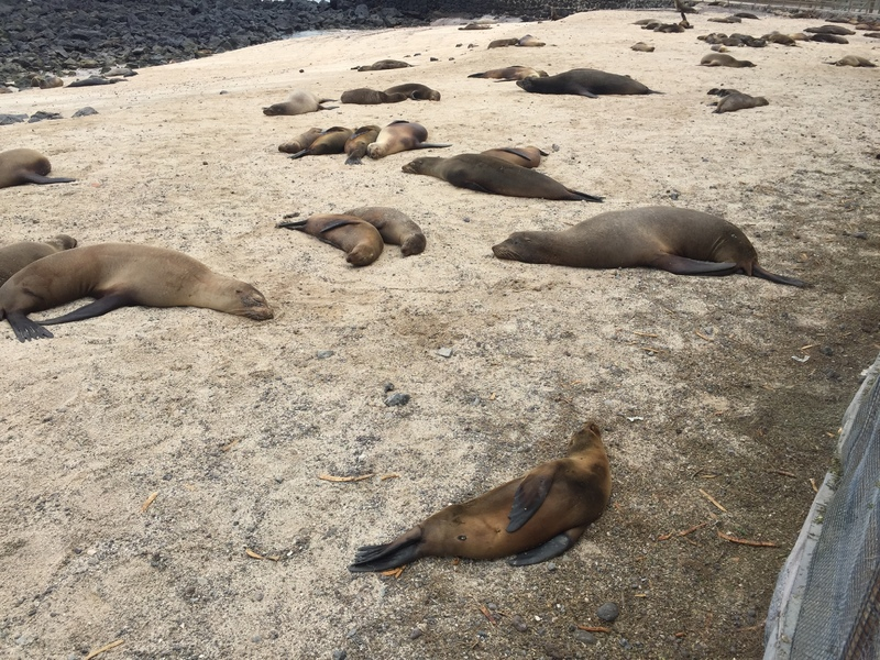 sea lions and fur seals in abundance