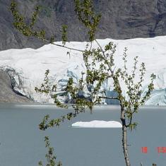 John Hopkins Glacier Juneau