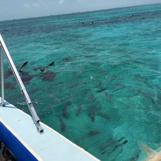 Belize City, Belize - snorkeling w sharks & stingrays
