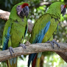 These macaws are so pretty.