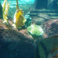 Bahamas - Underwater Paradise