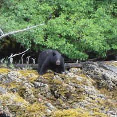 Pic from Alaska - Inside Passage by rode846