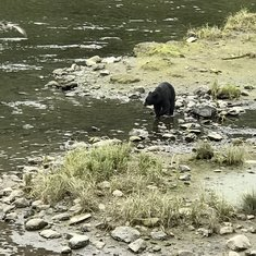 Seeing a black bear in the wild!