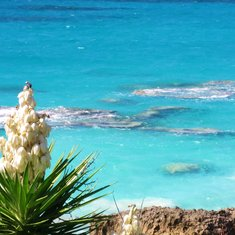 Pic from Bermuda by CJpurple